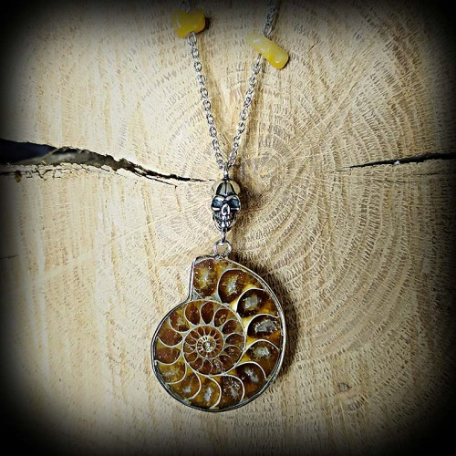 Collier fossile coquillage...